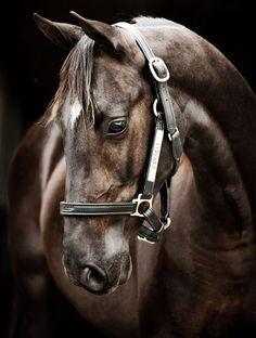 ♥ Horse Stuff ♥