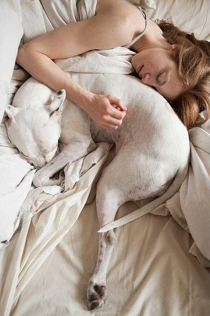 best dogdog images on pinterest mini bull terriers miniature