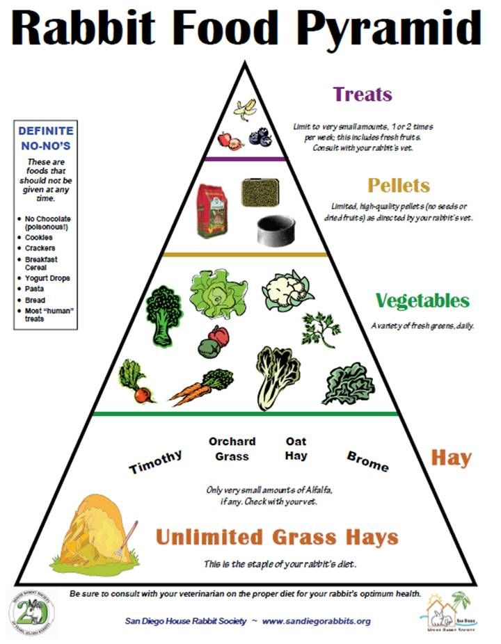 This a pyramid that shows what rabbits eat throughout the day. I have learnt the nutrition of rabbits through this picture.