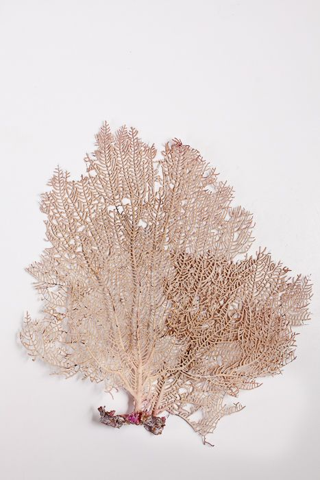 Collage With Nature — Sea Fan