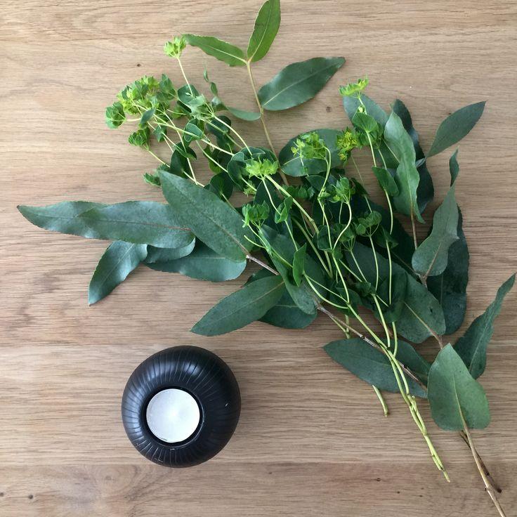 Wohnbrise: Eukalyptus, Deko