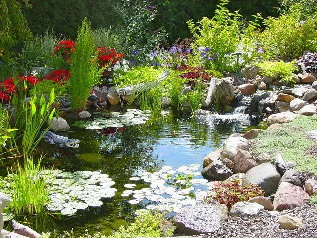 Backyard pond and garden landscaping design.