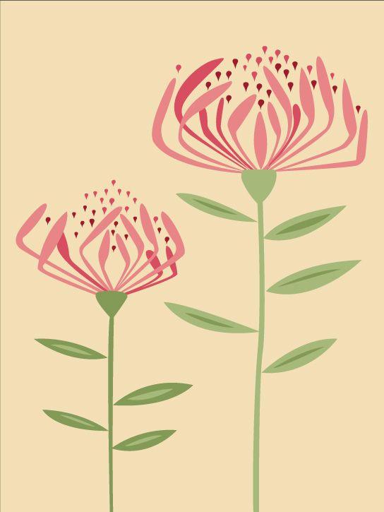 Dr Hugo's Proteas print