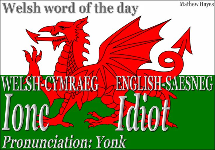 Welsh word of the day: Ionc/Idiot