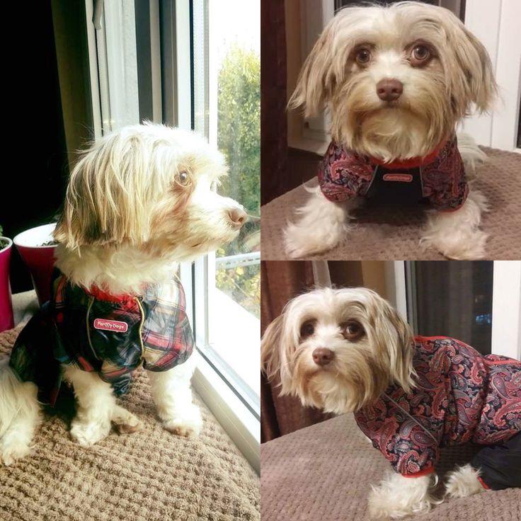 Maia, scumpa si dragalasa in Salopeta de Ploaie & Salopeta de Iarna de la King Maru --> https://kingmaru.ro/  #hainecaini #accesoriicaini #imbracamintecaini #caine #caini #catel #catei #dog #dogs #kingmaru