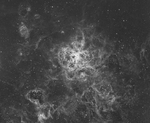"""""""Tarantula nebula aka NGC 2070 located in the Large Magellanic Cloud. This is something I'll be working over the next few nights ( if weather permits ) it is the largest emission nebula known. This is currently 4hr of Ha data. #youresa #igworldclub #weather #earth #telescope #universe #instagood #ig_photooftheday #instapic #instapicture #instagram #instaphoto #instaphotography #photoshop #photography #photographer #astrophotography #astronomy #stars #sydney #space #deepspace #galaxy #nebula…"""