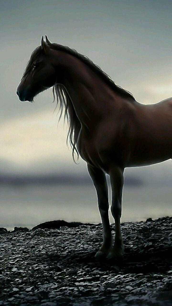 Pin Di Annarò Sa Su Horses Cavalli E Animali