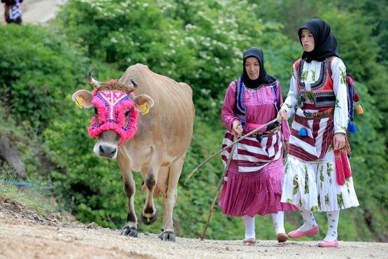 Trabzon'un Şalpazarı ilçesinde yaşayan Çepniler, yaylalara göç etme geleneğini sürdürüyor.