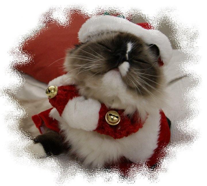 Merry Christmas, Santa Paws