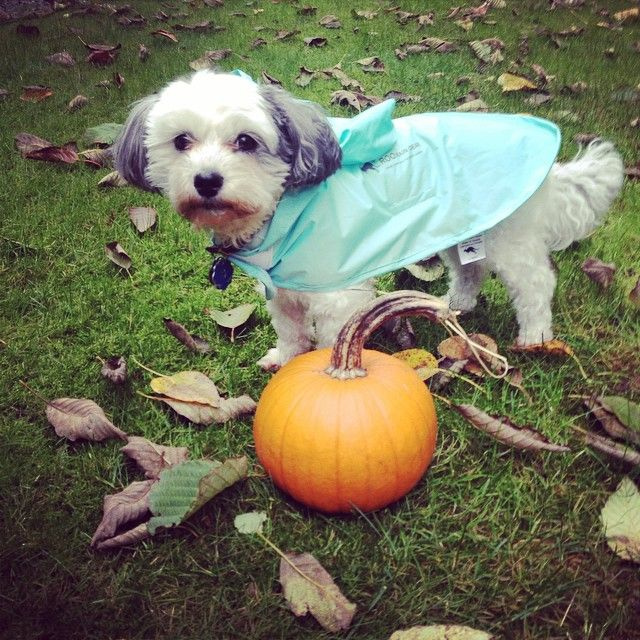 Dogs love their waterproof ponchos made from 100% recycled plastic bottles. Cute dog clothes