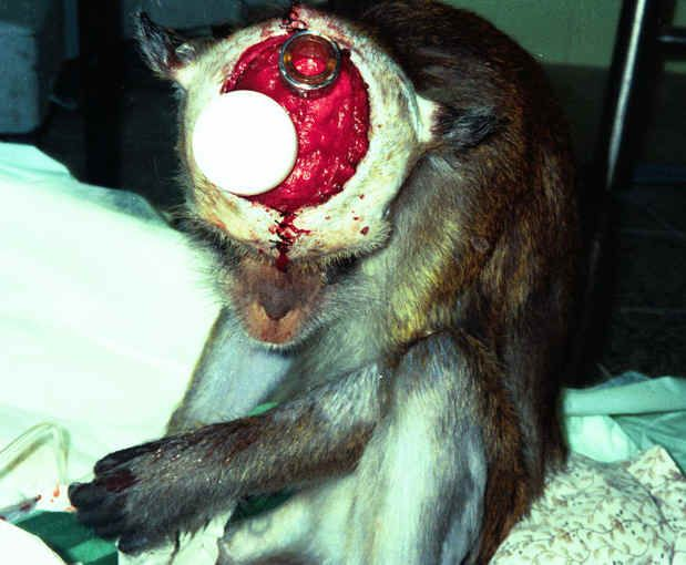 This is horrific and why I'm posting it. I am so against animal testing Bless all animals and their sweet souls. PLEASE KNOW WHAT YOU BUY! Animal testing is unnecessary in this day and age of computers and databases. BUY CRUELY FREE PRODUCTS!