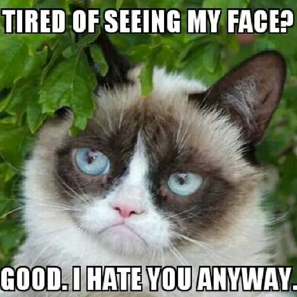 111 best images about Ode to Tarder Sauce aka Grumpy Cat ... Loathe Cat