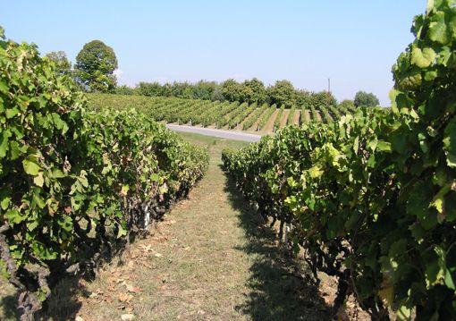 VISIT GREECE  Wineries in Veria.