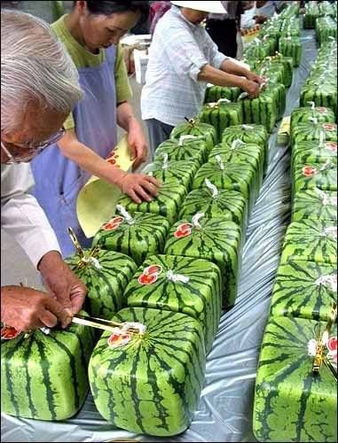 square watermelons from japan, to save frig space