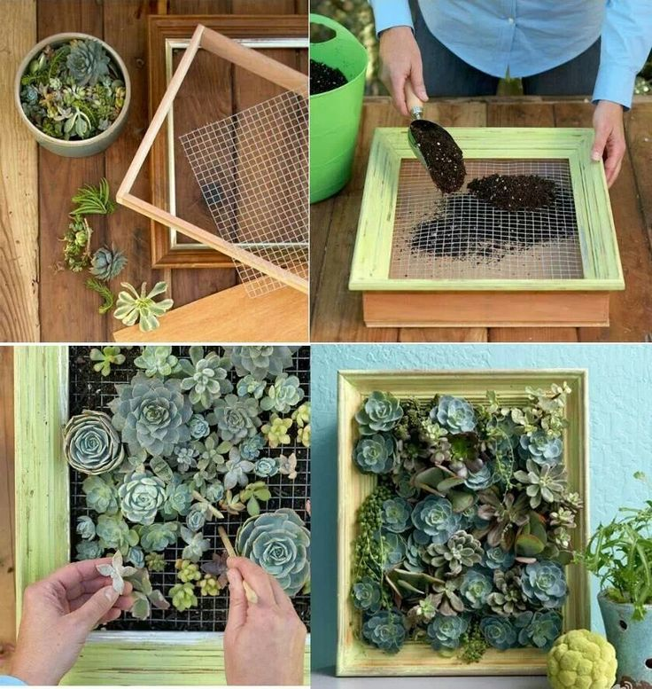 Small Vertical Succulent Garden For The Home Pinterest
