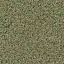 Free Textures for 3d, Ground, Europe, Grass