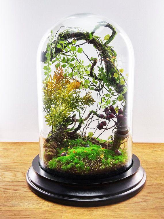 Les 25 meilleures id es de la cat gorie plantes for Mica decoration cloche