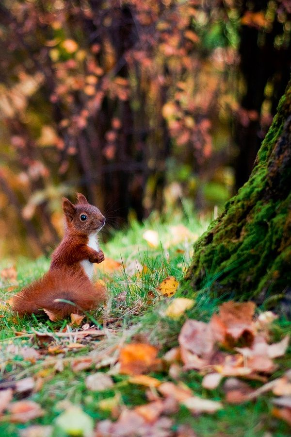 "wolverxne: "" Squirrel | by: [Empty Field] """