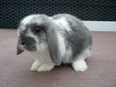 17 meilleures images propos de lapin sur pinterest - Mon petit lapin s est cache dans le jardin ...