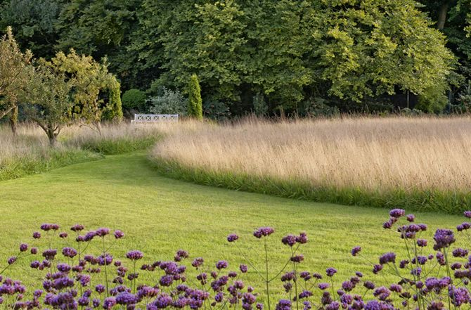 naturalized grasses and purple flowers - mowed and natural grasses