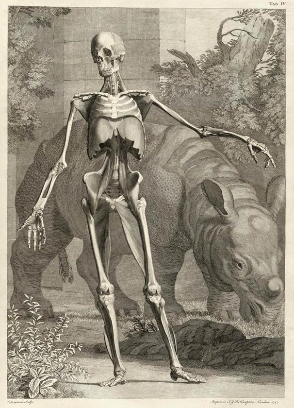 17 besten Anatomy. Bilder auf Pinterest | Menschliche anatomie ...