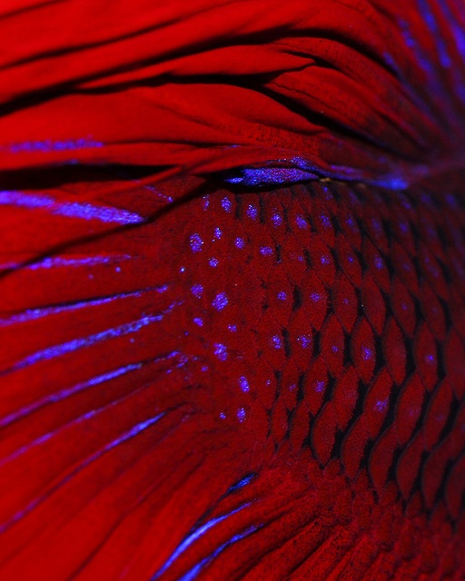 141 best images about betta fish on pinterest copper for Betta fish temp