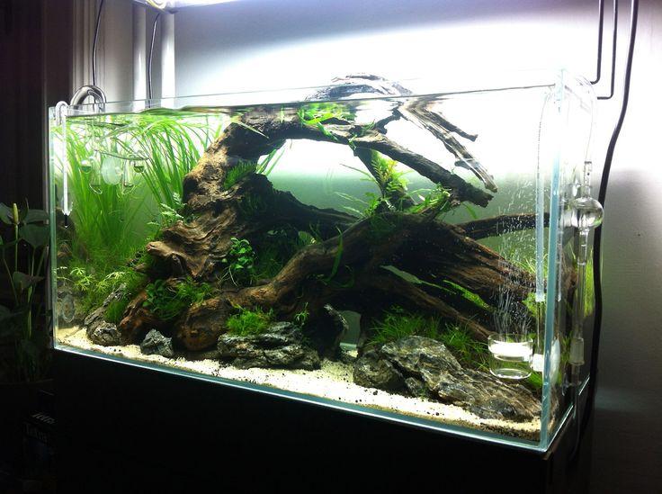 9 best fish tank ideas images on pinterest aquarium for Fish tank setup ideas