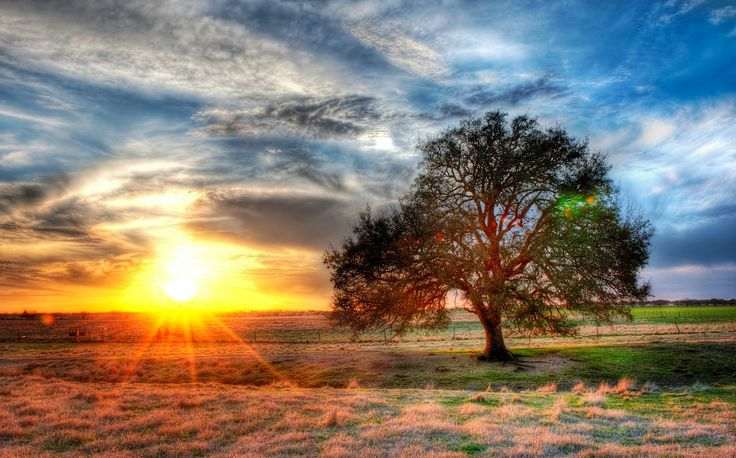 beautiful sunset on the texas farm