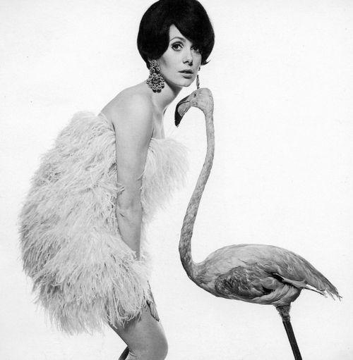 Catherine Deneuve forVogue, January 1968. Photo by David Bailey.