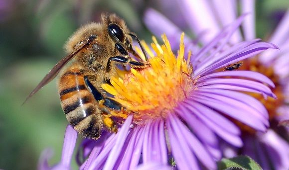 Ban bee-killing pesticides for good. To the 2015 election manifesto writers (as far as we can tell: Conservatives - Jo Johnson, Labour - Jon Cruddas, Liberal Democrats - David Laws , Green - Sam Riches and Caroline Bowe, UKIP - Suzanne Evans, SNP - Stewart Hosie, Plaid Cymru - Ian Johnson) Please pledge in your 2015 manifestos to ban the use in the UK of neuro-active insecticides (known as neonicotinoids). They are blamed around the world for a sharp decline in bee numbers and damage to…