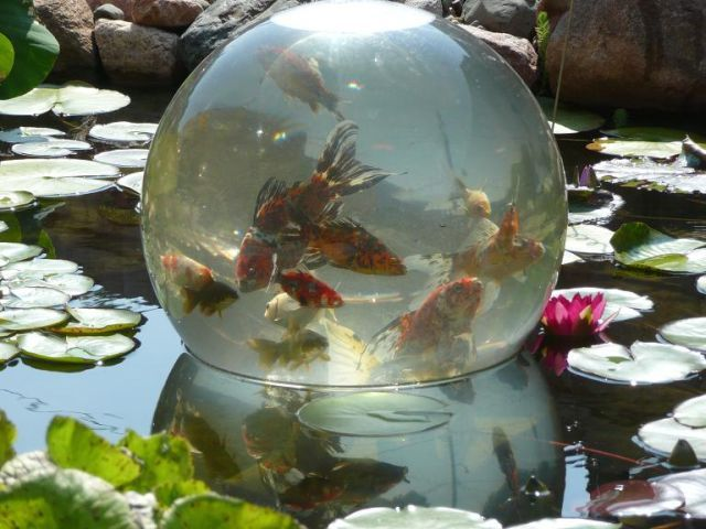 Backyard ponds fish and bowls on pinterest for Runescape koi pool