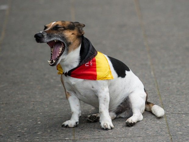 wazzup2!In Berlin unterstützt wirklich jeder die deutsche Fußball-Nationalmannschaft bei der WM 2014 in Brasilien