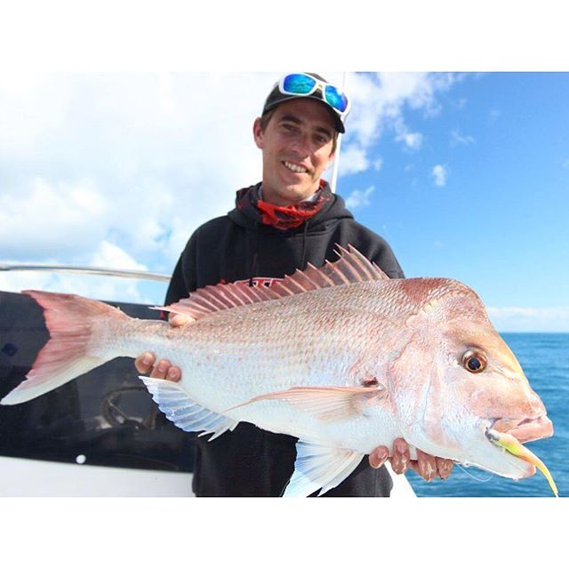@herveybaysportfishing snapping up yet another great catch. Check out the size of this beauty! #thisisqueensland