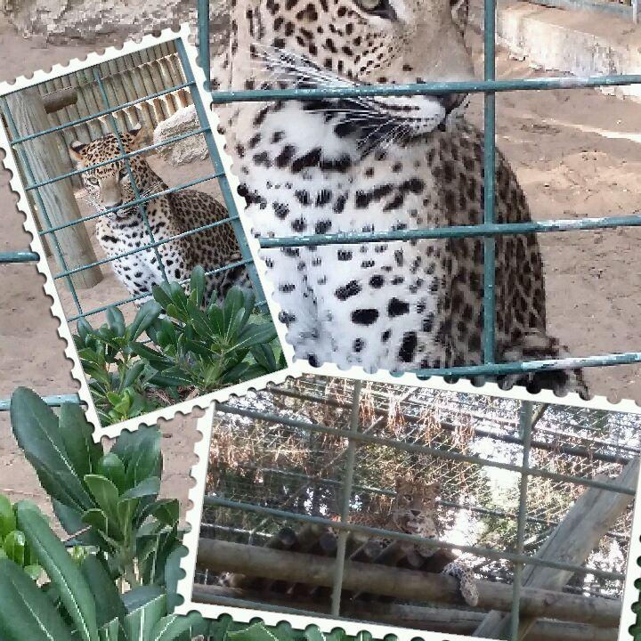 Zoo de la Palmyre en Charentes maritimes