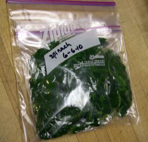 Learn how easy freezing spinach and other greens.  Use it in smoothies, casseroles and other dishes.