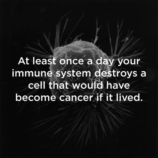 Good Guy Immune System.