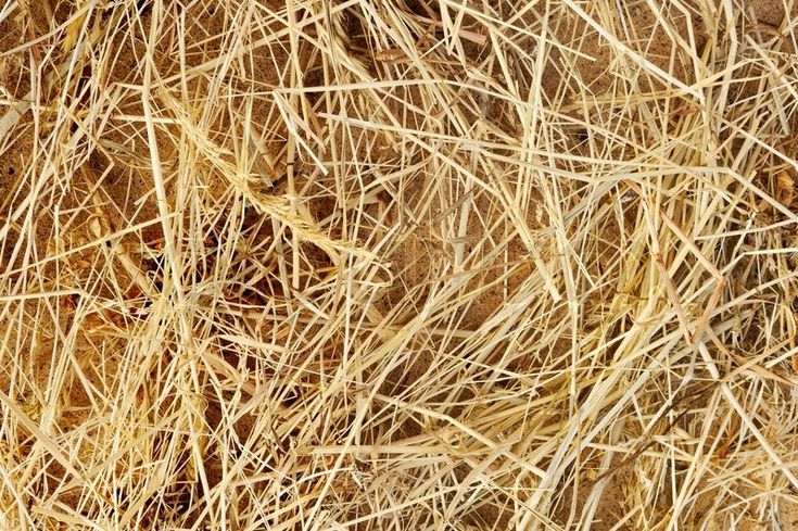 Stock image of 'Detail of dry grass hay background'
