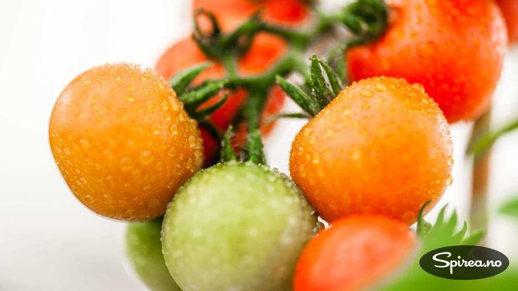 Har du også problemer med å rekke å få modne tomater på plantene før sesongen er over? Årsaken kan være at du velger en sort som ikke passer til norsk klima. I fjor sommer var vi på besøk i hagen til Gunn Apeland på Jessheim for å lage reportasje til Norsk Hagetidend. Reportasjen står på …