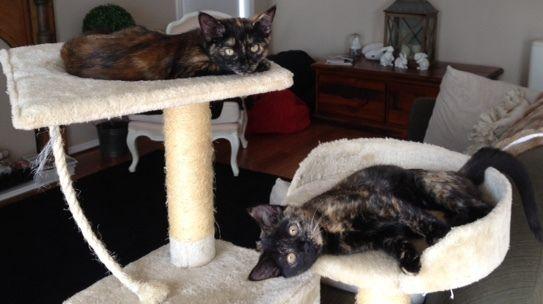 Beautiful sisters iMac and iTune.