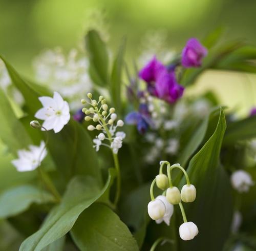 Swedish forest flowers