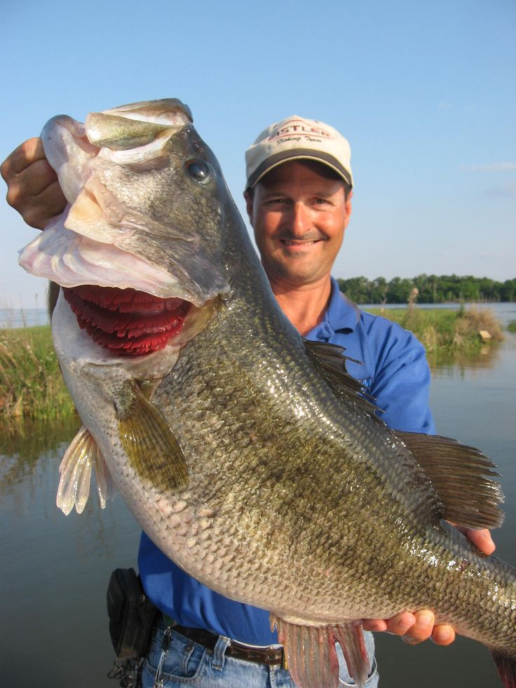 1000 ideas about lake fork fishing report on pinterest for Lake fork fishing guides