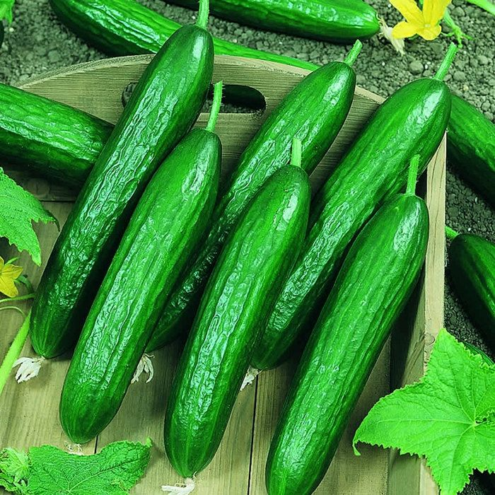 Beit Alpha Cucumber Seeds Non GMO by BoxGardenSeeds on Etsy