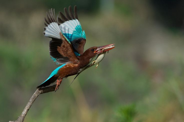 Flying meal by Ori Danziger - Photo 72583661 - 500px