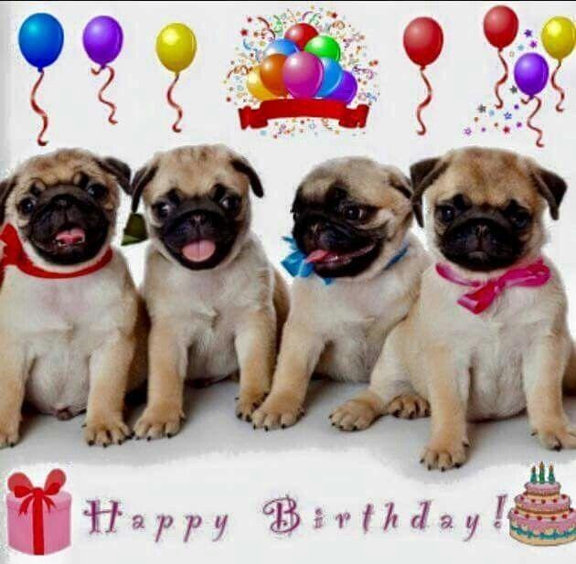 Idea By Christina Hilt On Birthday Messages Birthday Pug Happy