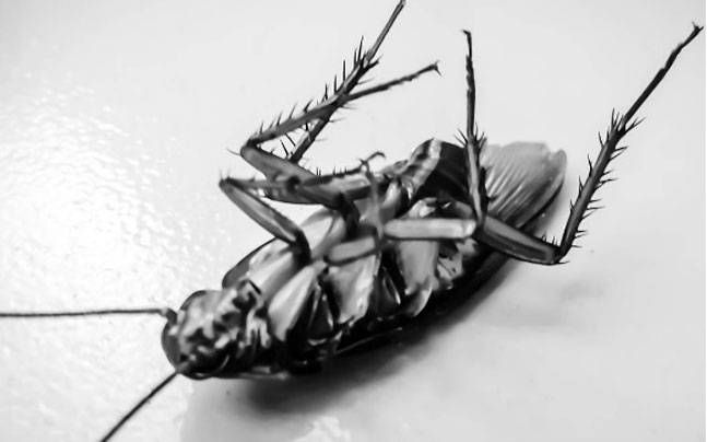 5 Ways To Keep Your Home Cockroach Free Home Management
