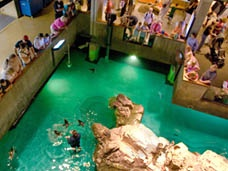 Meet the amazing creates of the Sea at the New England Aquarium! The 200,000-gallon Giant Ocean Tank is the centerpiece of the Aquarium, Boston's most visited tourist attraction.