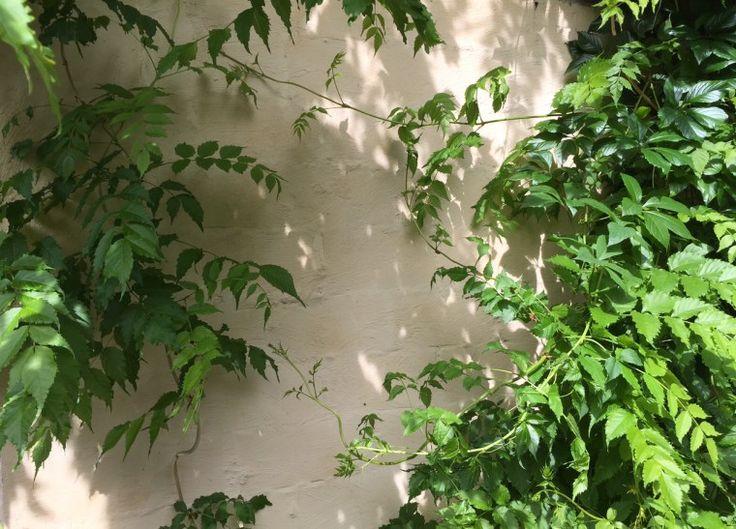 Je gevel of oude tuinmuur omtoveren met kalei…   Tintelijn blogt