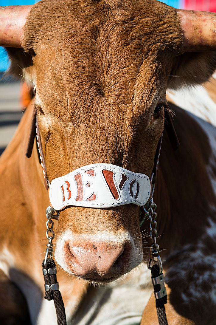 Bevo XV                                                                                                                                                                                 More