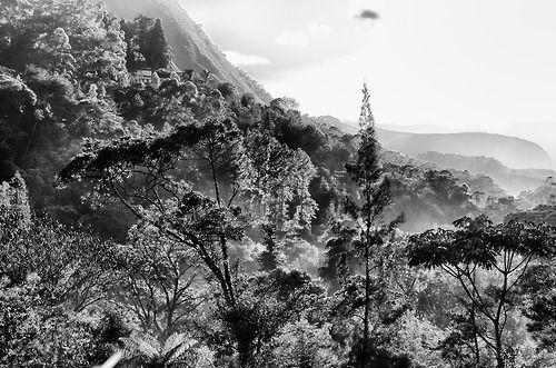 #original photographers #photographers on tumblr #lensblr #landscape #black and white #fog by Andres Romero http://aromgon.tumblr.com