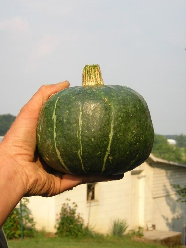 tips on when to pick squash and how to store them